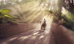Al Ain Oasis - Coming Soon in UAE, comingsoon.ae