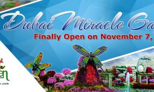 Dubai Miracle Garden 2017 – 2018 - Coming Soon in UAE, comingsoon.ae