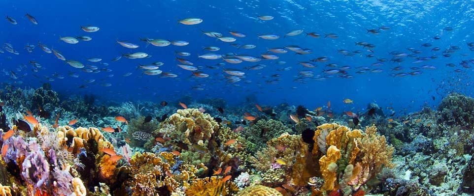 The largest coral garden in the world - Coming Soon in UAE, comingsoon.ae