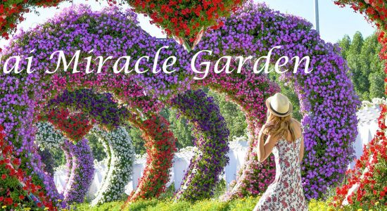 Dubai Miracle Garden 2019 – 2020 - comingsoon.ae