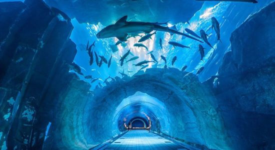 Dubai Aquarium and Underwater Zoo - comingsoon.ae